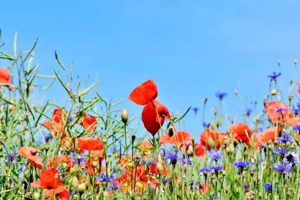 ambi-fete-fleur